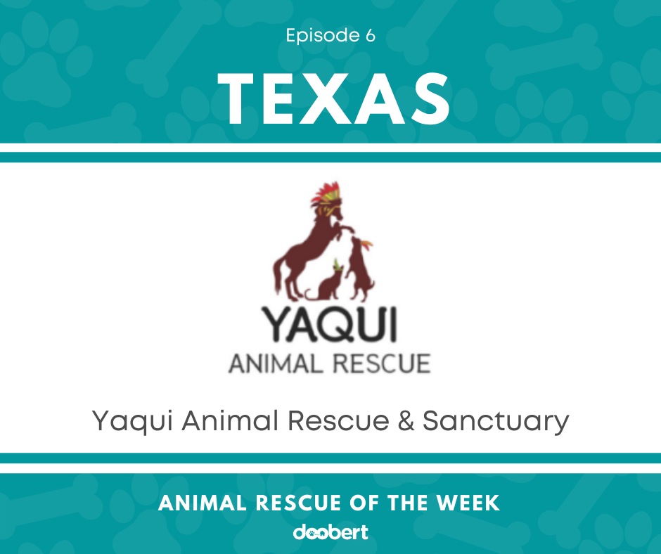 FB 6. Yaqui Animal Rescue & Sanctuary_Animal Rescue of the Week