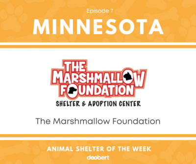 FB 7. The Marshmallow Foundation_Shelter of the Week