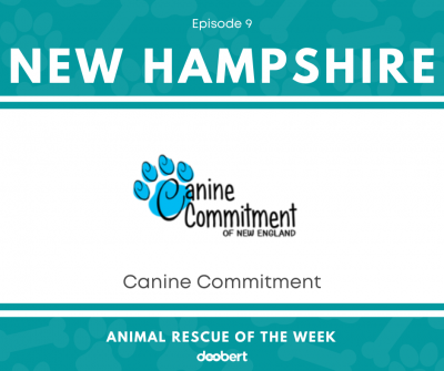 FB 9. Canine Commitment _Animal Rescue of the Week