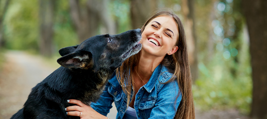 7 Must-Do's When You Find a Lost Dog