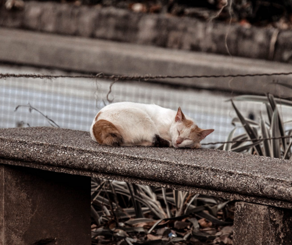 7 Ways to Help Put An End to Animal Homelessness