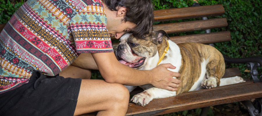 Bulldogs Are Beautiful Day: 6 Things that Make Bulldogs Beautiful (Inside and Out)
