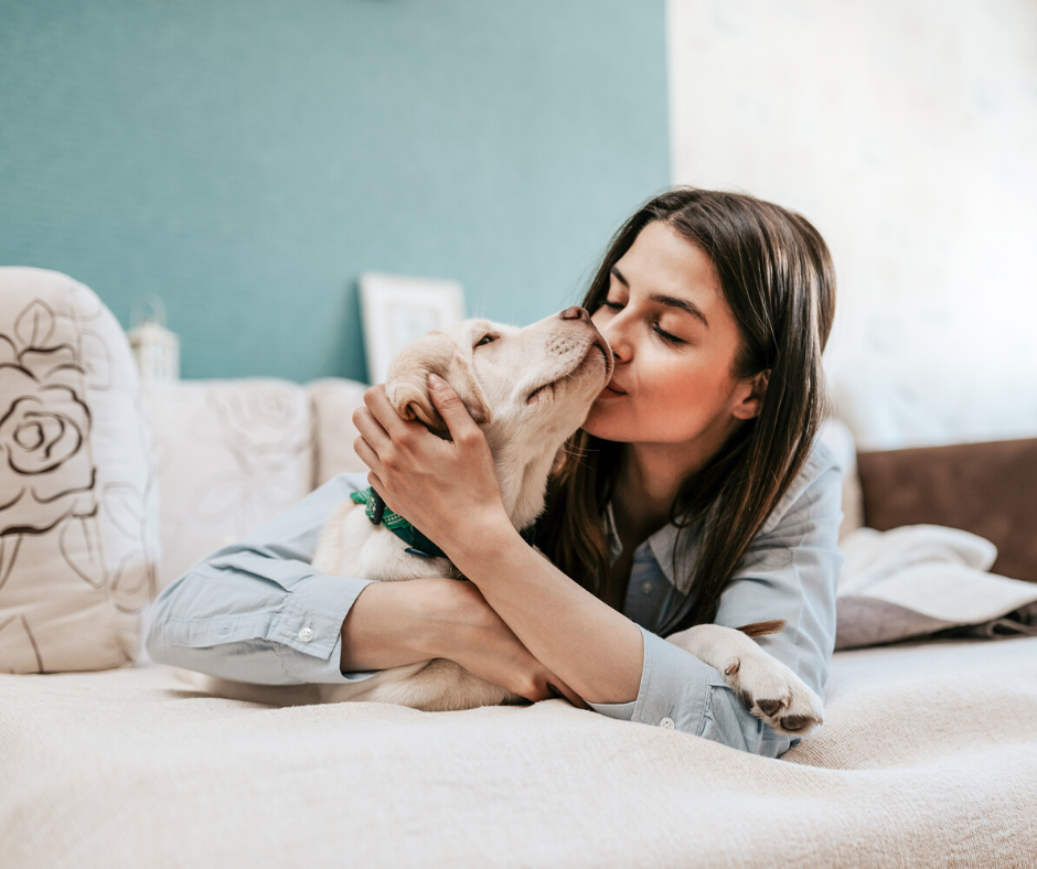 4 Tips on Keeping Pets Safe During the COVID-19 Pandemic