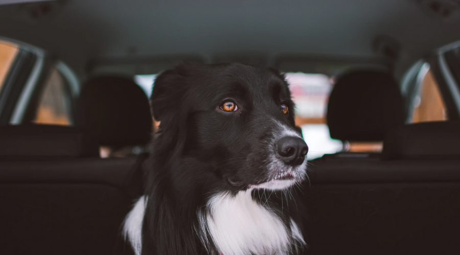 5 Things to Love About Animal Transport