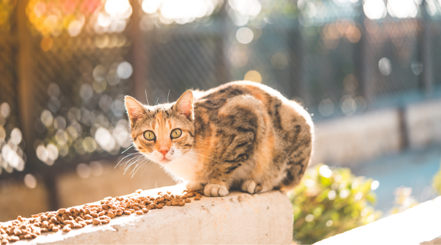 Is It a Feral or Stray Cat? Here's How to Tell the Difference