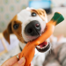 5 Ways to Entertain Your Dog While Under Quarantine