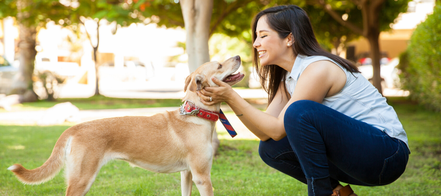 Shelter Pet Photography: Do You Have What It Takes?