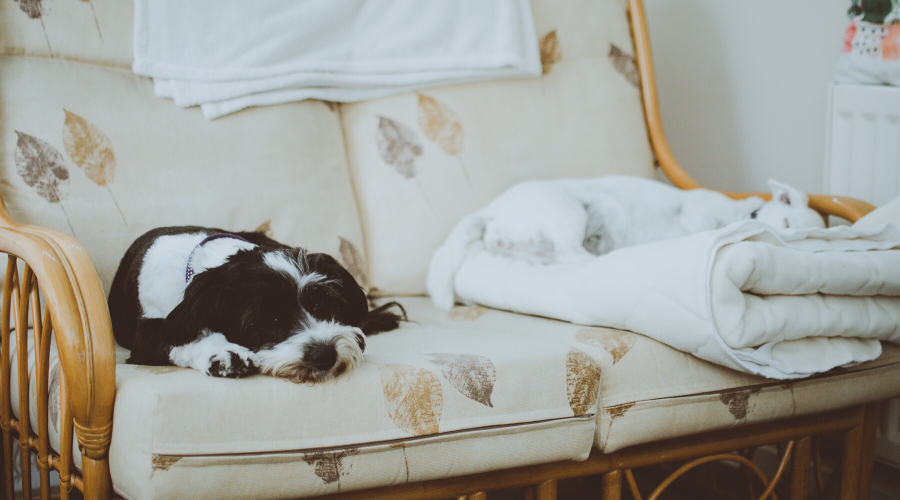 9 Quick Tips to Make Your Dog More Comfortable with Parvo