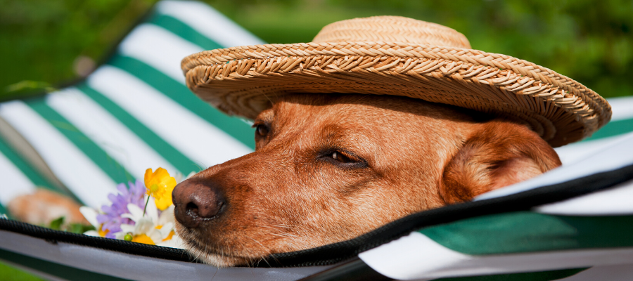National Sunscreen Day: Do Dogs Need Sunscreen?