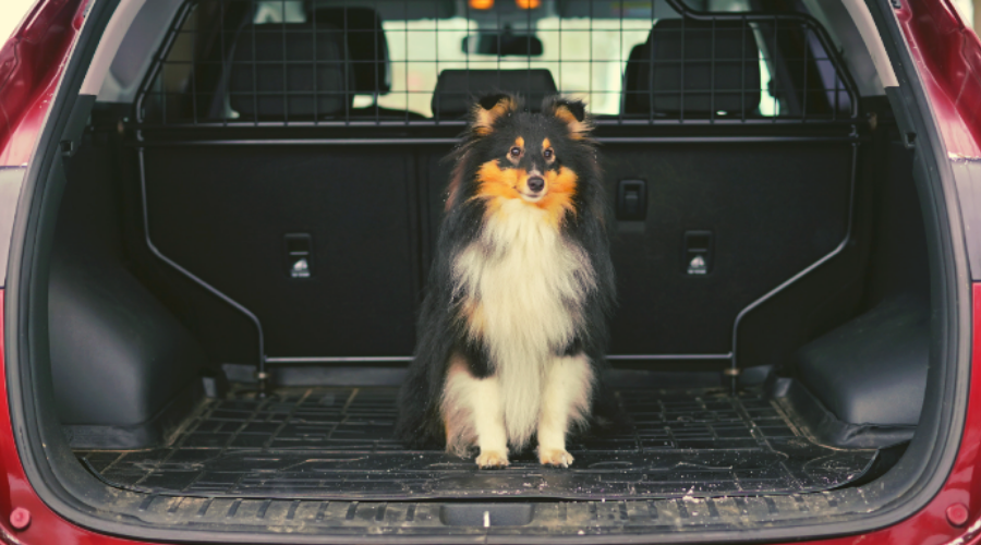 Animal Rescue Transports in 8 Easy Steps