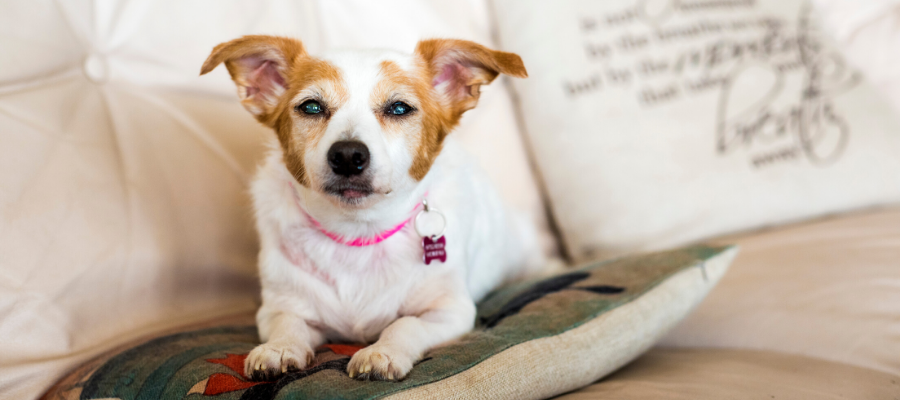 3 Common Diabetes-Related Complications in Pets
