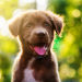 6 Ways Your Dog Can Catch Parvo