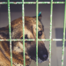 5 Things You've Heard About Shelter Dogs that Are Completely Untrue