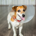 12 Items You Definitely Don't Want Missing from Your Pet First-Aid Kit