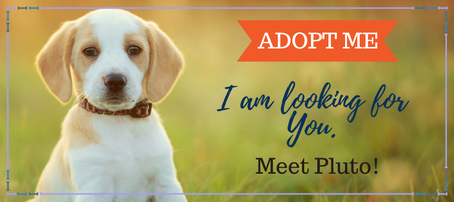 6 Simple But Effective Ways to Get Your Foster Pet Adopted