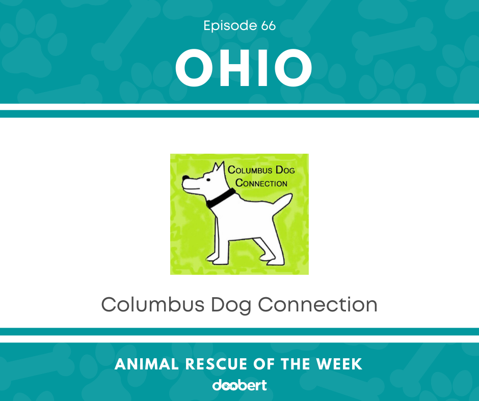 Columbus Dog Connection