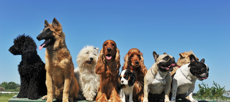 How to Pick the Right Dog to Adopt