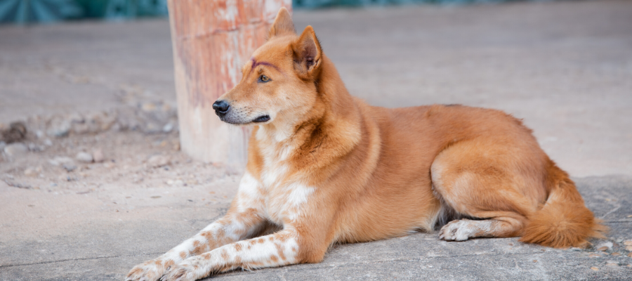 3 Simple Acts of Kindness You Can Do To Help Stray Dogs