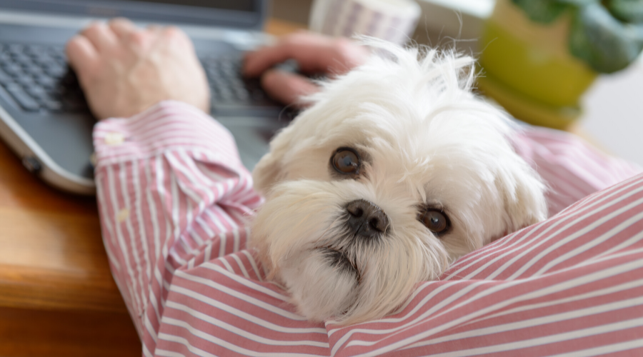 National Take Your Dog to Work Day: Off to Work With a Dog on Your Lap