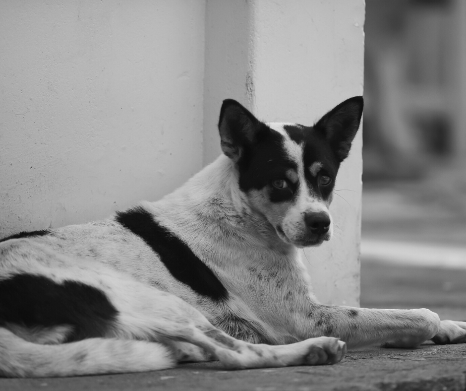 Simple Acts of Kindness You Can Do To Help Stray Dogs