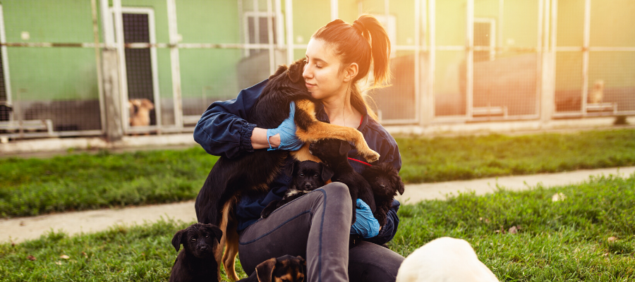 Volunteering in Animal Shelters: Your No-Prescription Happy Pill