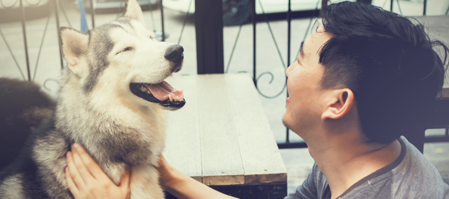 7 Reasons Why You'll Love Fostering An Older Dog
