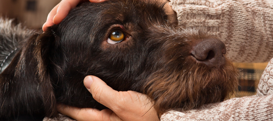7 Reasons Why Rescues Are Your Best Match