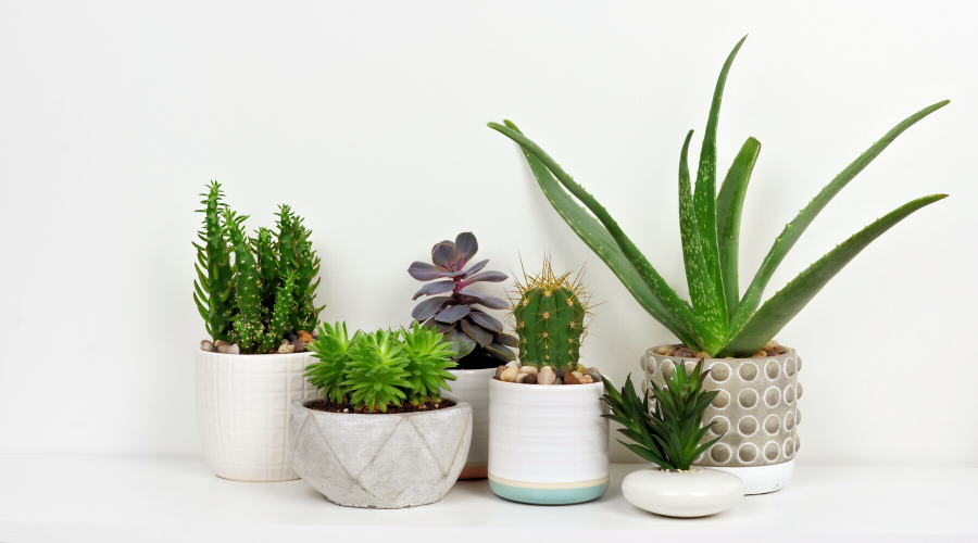 8 House Plants Pet Owners Need to Get Rid Off ASAP