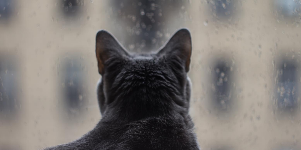 Cat looking out a stormy window.