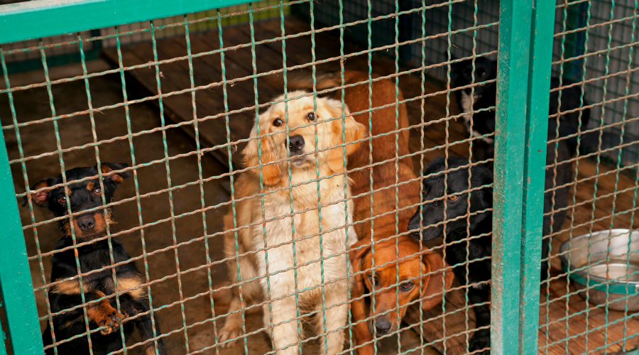 3 Ways to Help Cut Overcrowding in Animal Shelters