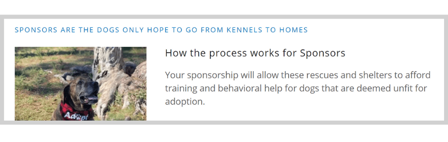 From Kennels to Homes Is Helping Behavior Issue Dogs Find Homes through Sponsored Training