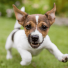 Blood Protein Supplements Proven to Reduce Stress in Dogs | WINPRO