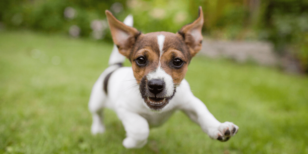 Blood Protein Supplements Proven to Reduce Stress in Dogs   WINPRO