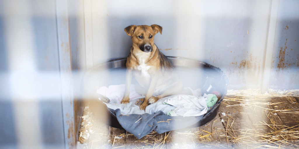 Challenging Society's Attitude Towards Disadvantaged People and Undesirable Dogs | Reboundog