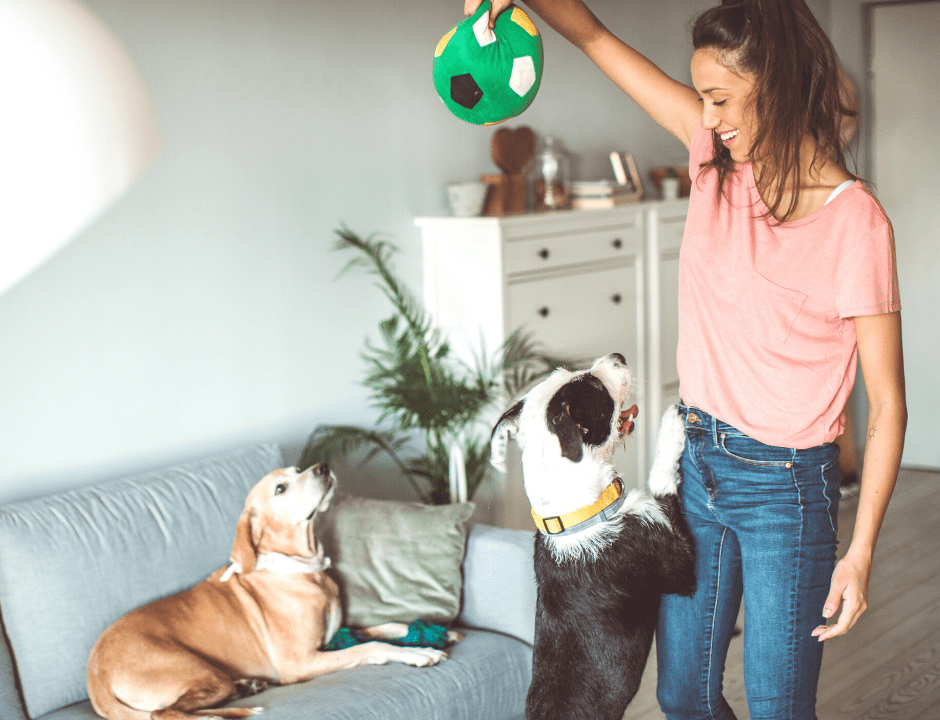 LA-Based Dog Daycare Offers Pet Training and Ultra-Flexible Hours | Dogdrop