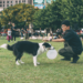 Helping Dog Trainers Market Themselves and Grow Their Business   The Modern Dog Trainer