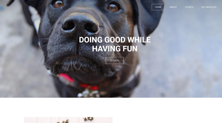 Connecting Dog Lovers and Vendors to Raise Funds for Shelters and Rescues   Real Dog Moms of Chicago