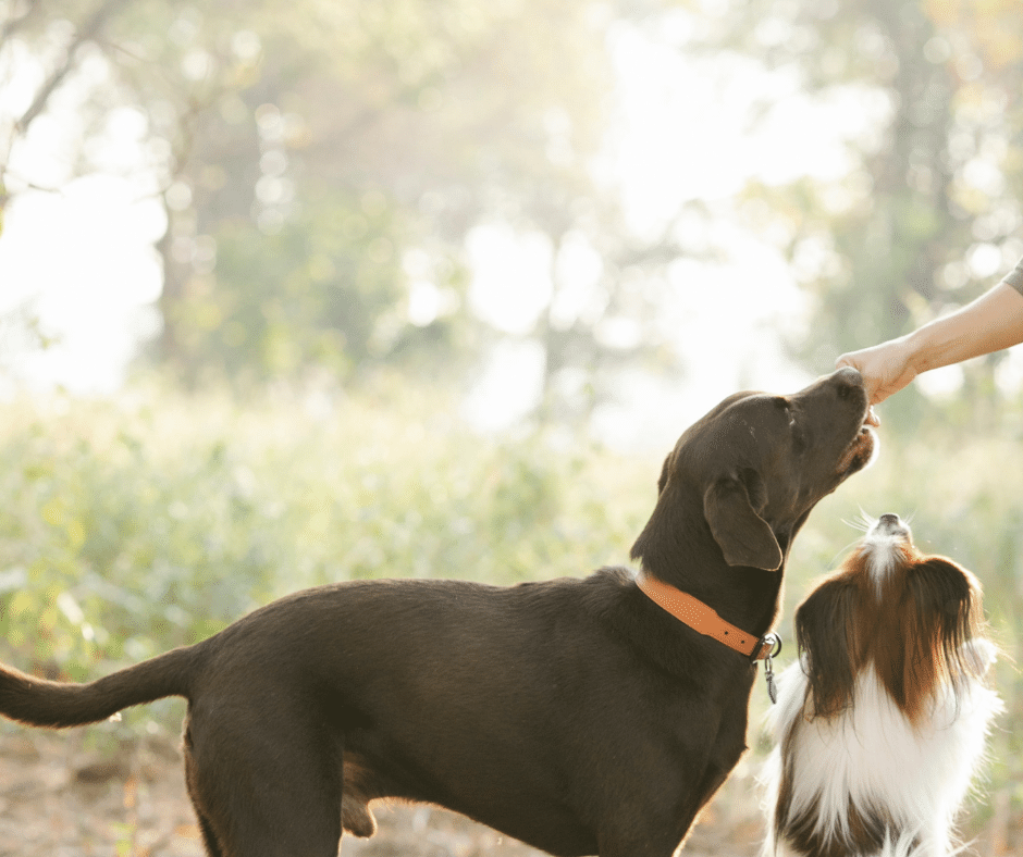 Sustainable Pet Foods That's Good for Your Pet and the Planet | Petaluma
