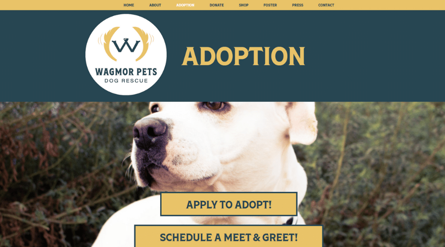 5-Star Hotel & Spa Rehomes Homeless Pets Wagmor Pets Dog Rescue