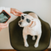 Build Authentic Connections With Pet Owners as a Pet Business | Skarlet Shuplat
