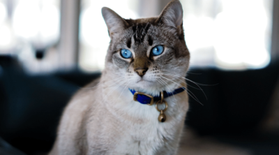 Glow Track Cat Camera Collars Make Your Cats Easy to Find