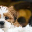 Modern Dog Crate Products That Reinvent Pet Living | KindTail