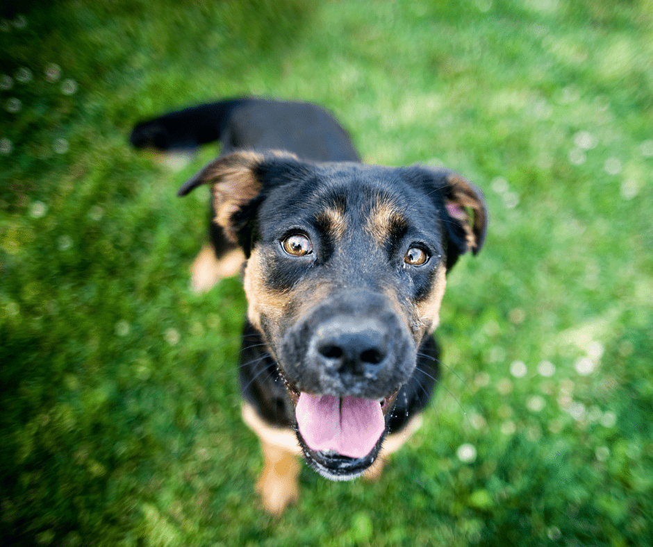 Photo of black and brown rescue dog