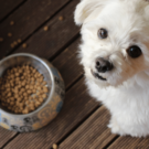 Sustainable Dog Food and Treats to Improve Dog Diet | Jiminy's