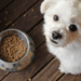 Jiminy's Provides Sustainable Dog Food and Treats to Improve Dog Diet