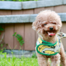 Making Dog Science Accessible to Give Good Dogs a Great Life | Petminded