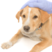 VetVet Airbnb Platform for Vets Makes Vet Care More Accessible to Pets